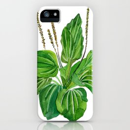 Plantago major iPhone Case