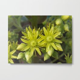 Blooming Green Metal Print