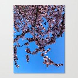 South Portland Spring 2018 (1) Canvas Print