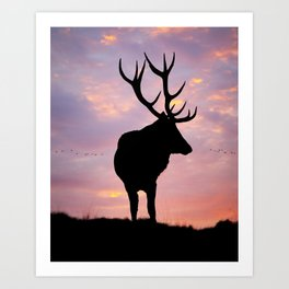Stag And Sunset Art Print