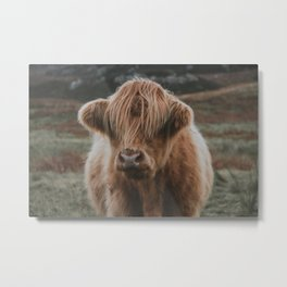 Highland explorer Metal Print