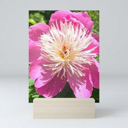Pretty in Pink Peony Mini Art Print