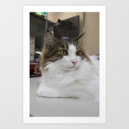 The Cat from the Cafe Art Print