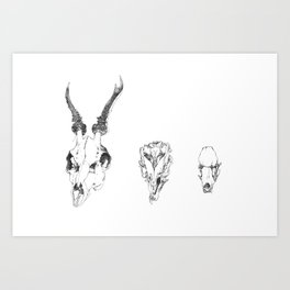 sc Art Print