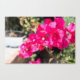 bouganvilea flower in nydri lekada greece Canvas Print