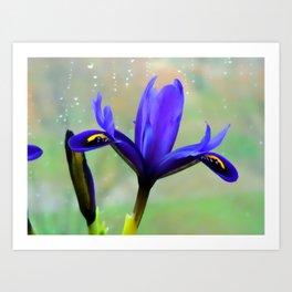 Blue Orichd flowers Art Print