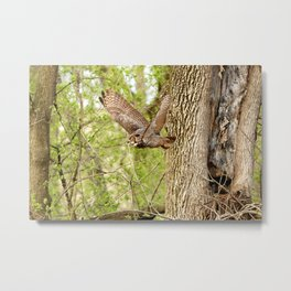 Great horned owl on the hunt Metal Print