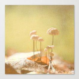 Teeny Mushrooms Canvas Print