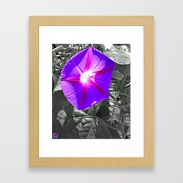 Floral Light Framed Art Print