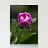 peony Stationery Cards featuring Peony by Christina Rollo