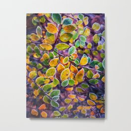 Frosty autumn leaves Metal Print