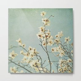 Magnolia blossoms. Mint Metal Print