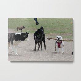 Little dog Big stick Metal Print