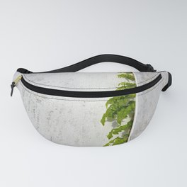 Wisteria climbing plastered wall Fanny Pack
