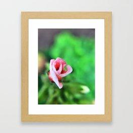 Baby Bloom Framed Art Print