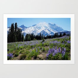 lupine fields at Rainier Art Print