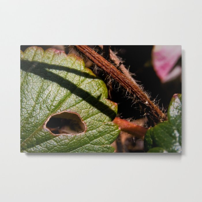 Leaf With A View Metal Print
