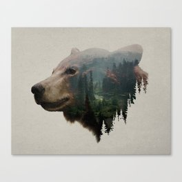The Pacific Northwest Black Bear Canvas Print