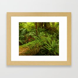 In The Cold Rainforest Framed Art Print