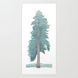 Giant Blue Spruce Art Print