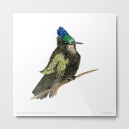 Antillean Crested Hummingbird Metal Print