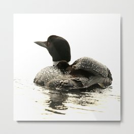 Common loon and her chick Metal Print