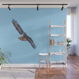 Common Buzzard (Buteo buteo) in flight  blue sky Wall Mural