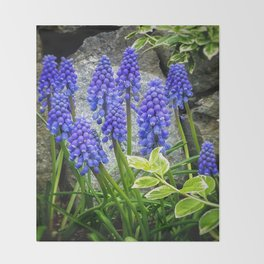 Grape Hyacinth DPSS170416a Throw Blanket