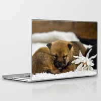 shiba inu Laptop & iPad Skins featuring Red Shiba Inu Puppy by Blue Lightning Creative
