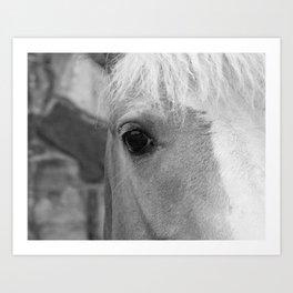 Black and White Horse Art Photography Art Print