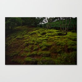 WINTER MOSS Canvas Print
