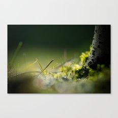 microcosmos Canvas Print