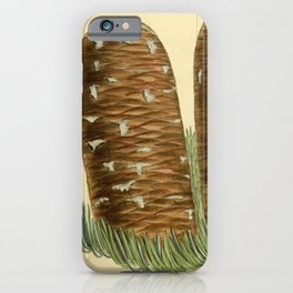 Flower 8552 abies magnifica iPhone Case