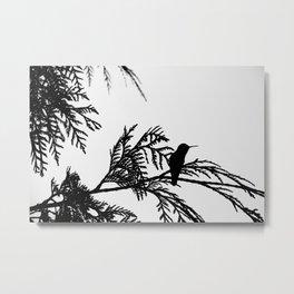 the thoughtful hummingbird Metal Print