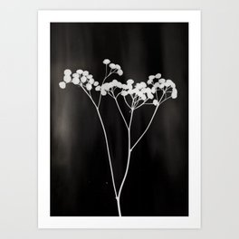 Flower Photogram II Art Print