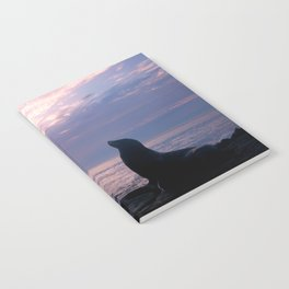 La Jolla Sea Lion Notebook