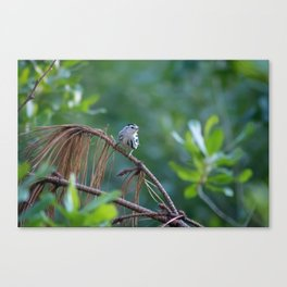 Little Guy in the Forest Canvas Print