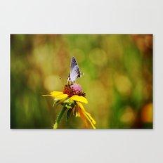 Brown Eyed Susan & Hairstreak Butterfly Canvas Print