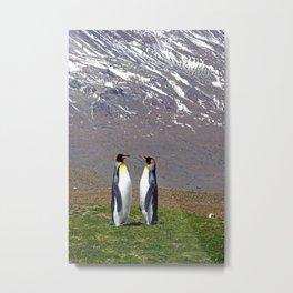 King Penguins Bonding Metal Print