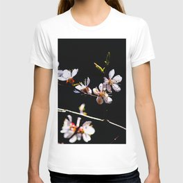 Impressive, Elegant Japanese Apricot Flowers Against The Black Background T-shirt