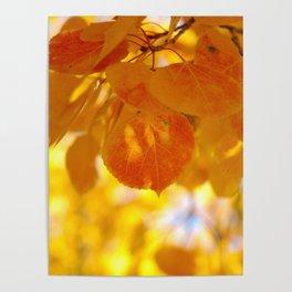 Sunlight through autumn aspen leaves Poster