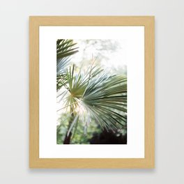 Palm tree in golden hour | Ethereal colors, close up | Wanderlust botanical print Framed Art Print