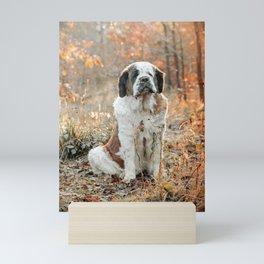 Cute St Bernard dog in Autumn Mini Art Print