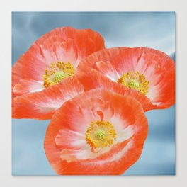The beauty of poppies Canvas Print