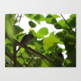First Attraction Unaltered Canvas Print