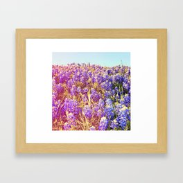 Bluebonnets! Framed Art Print