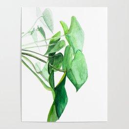 PLANT NO. 001 Poster