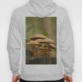 Gimnopilus mushrooms family Hoody