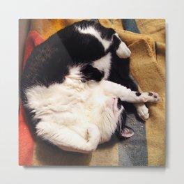 Cat Belly Metal Print
