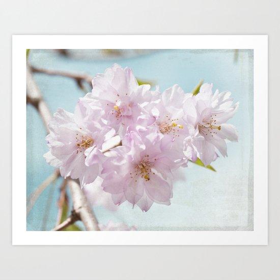 Spring Cherry Art Print